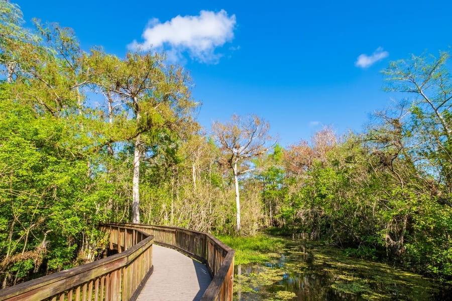 Hiking trail in the Big Cypress National Preserve Florida