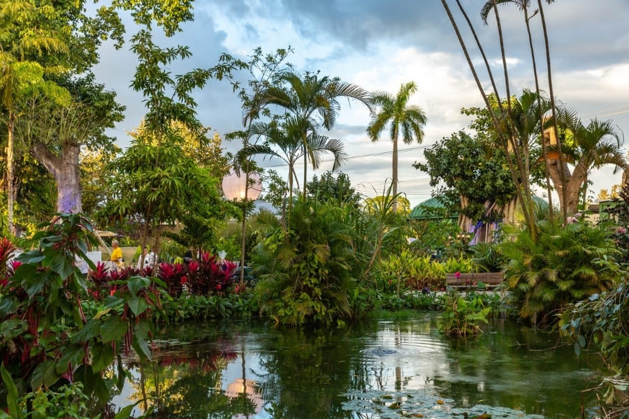Plants and trees from Everglades Wonder Gardens in Florida